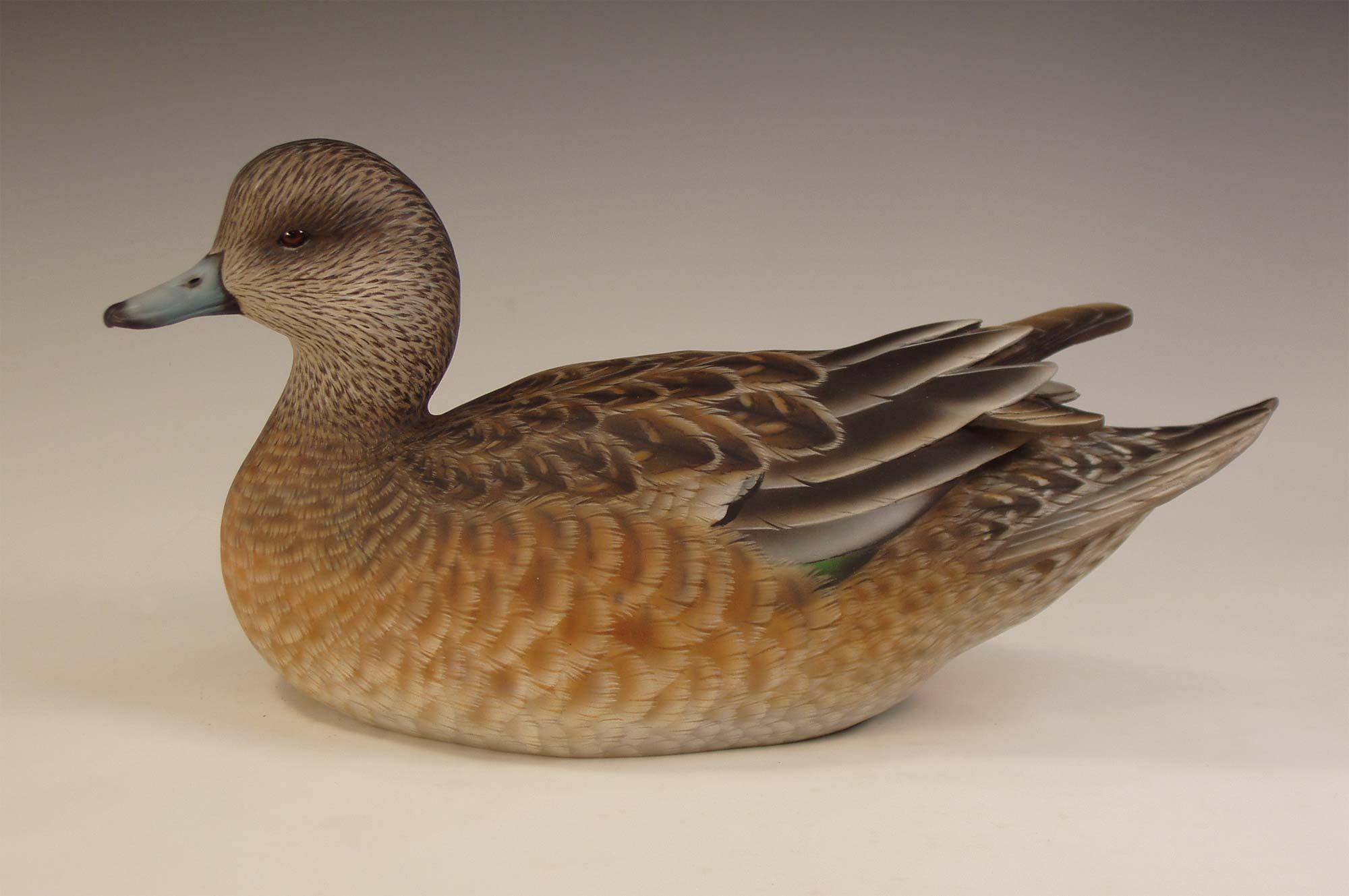 Wigeon duck hen - photo#6